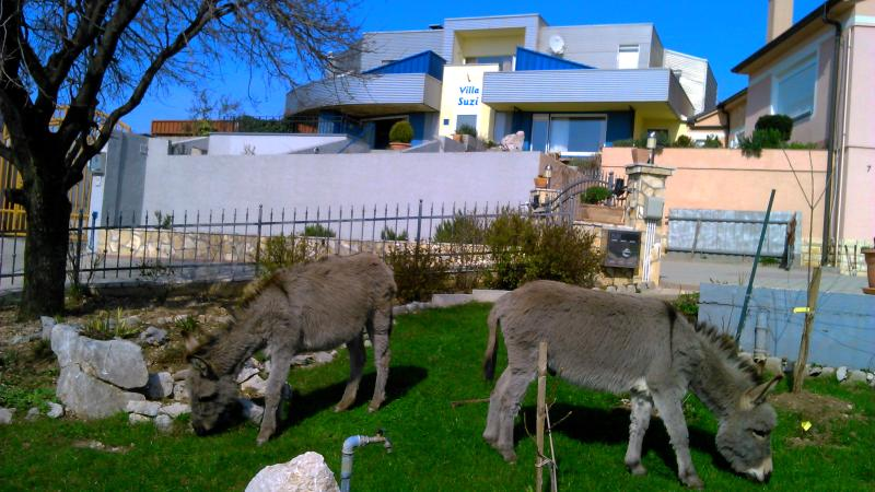 Apartment in modern house with charme of a farm :), alquiler vacacional en Smrika