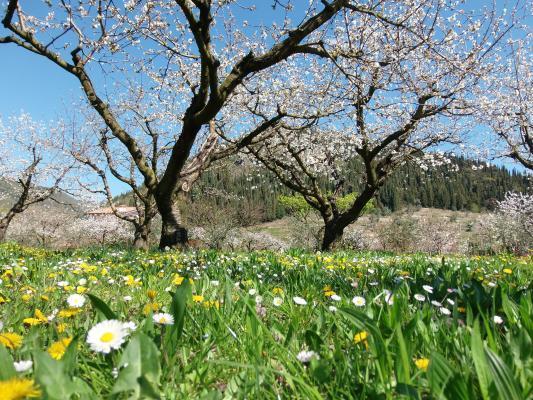 Vista del parco esterno spettacolere dei ciliegi in fiore