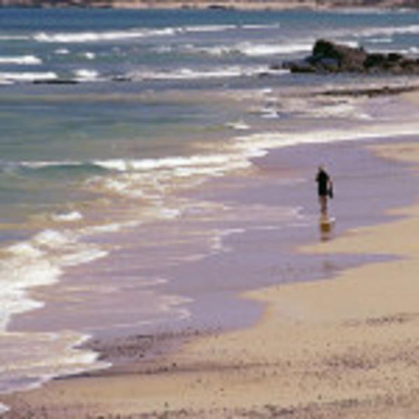 playas vírgenes de Cabo Pulmo.