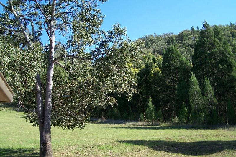 The view from the kitchen window, a kurrajong tree in the foreground.
