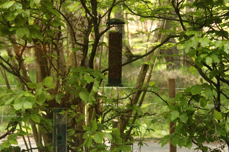 Feeders on bushes in front of nature bedroom window. Wonderful sight with birds every few minutes