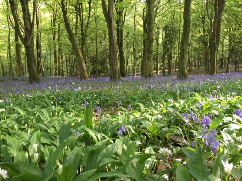 Forest Fawr walk near Chapel House