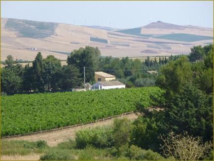 Vista de la casa de campo con viñedos!