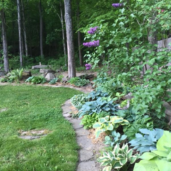 Back yard gardens near the woods