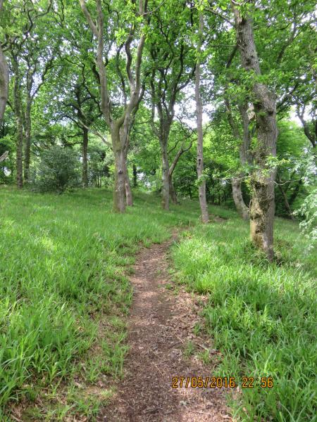 One of the paths through our 8 acre woodland leading to waterside