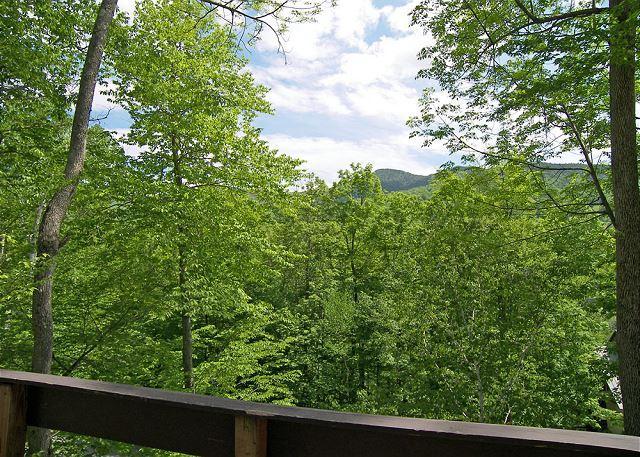 Summer View from Upper Deck