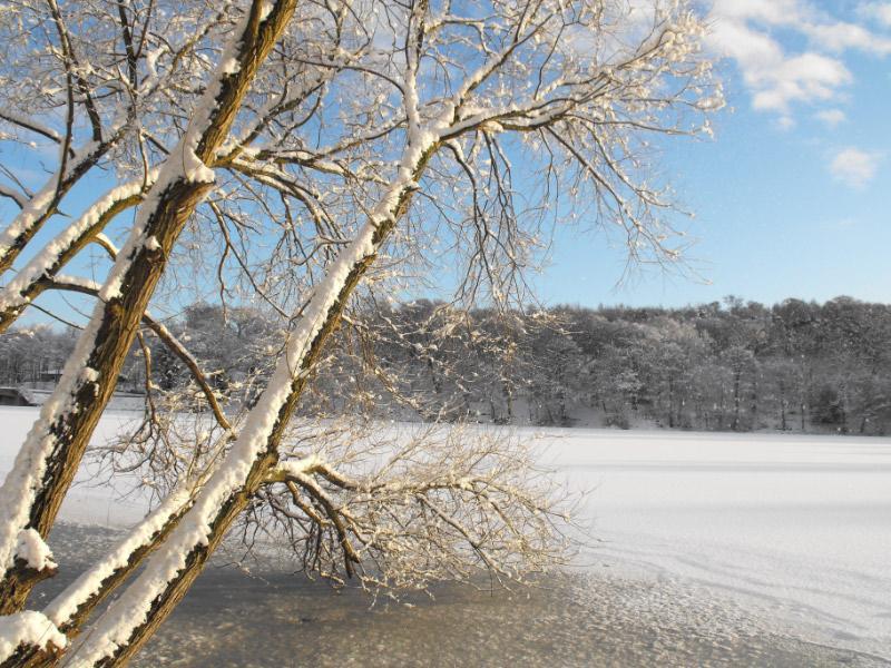 Winter Wonderland YSP