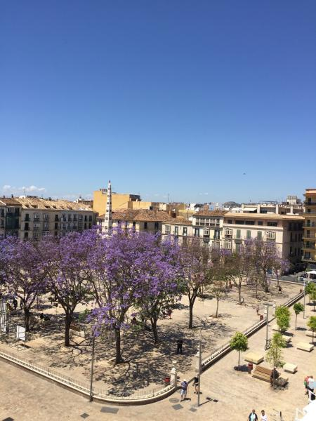 Plaza de la Merced, Picasso area and surroundings to the apartment