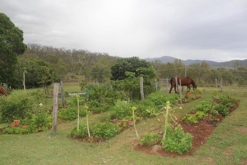 The vegetable garden provides fresh greens, chillies, etc.
