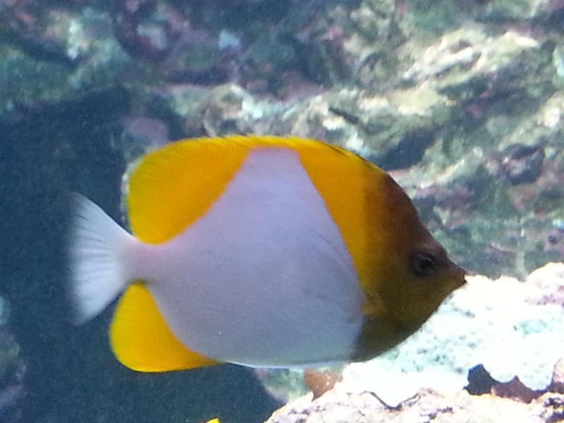 The deepest aquarium in Europe at the Cite de la Mer in Chebourg