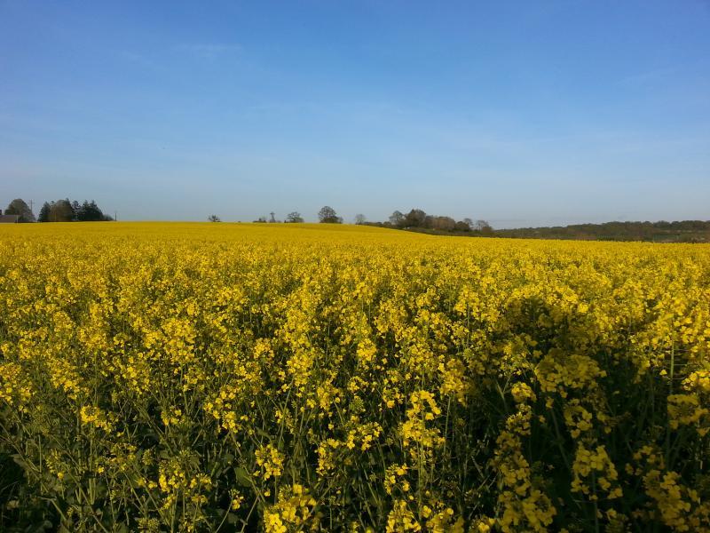 Spring colours in St Vigor