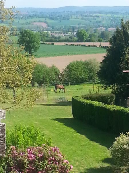 Ponies grazing in the sun