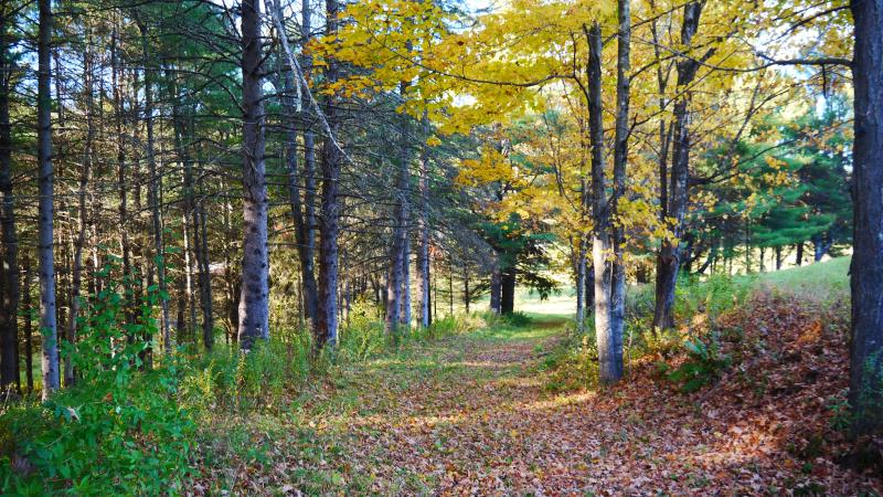 Path leading to Ausable River