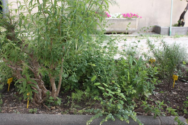 Devant la terrasse, un carré de dix herbes aromatiques!