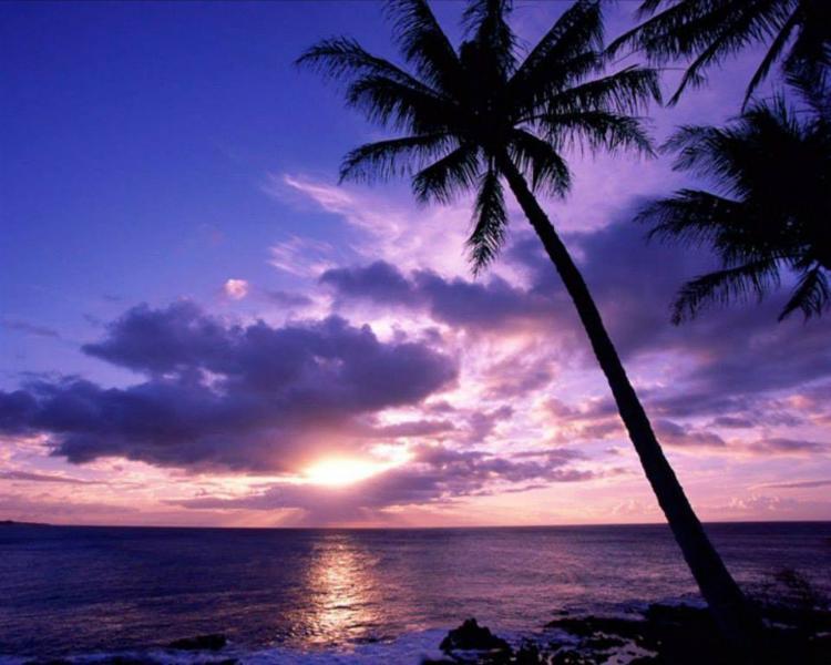 Go ahead and clear your calendar for a tropical Playa del Carmen getaway!