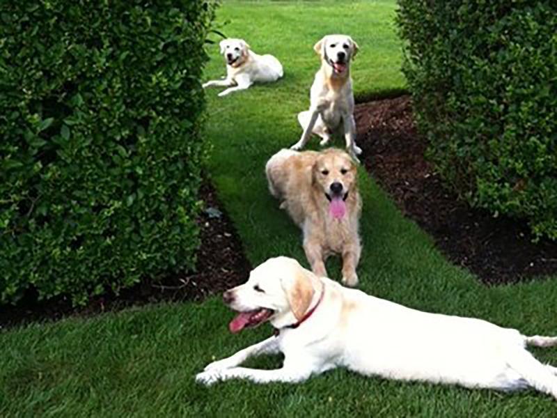 Dogs in Backyard