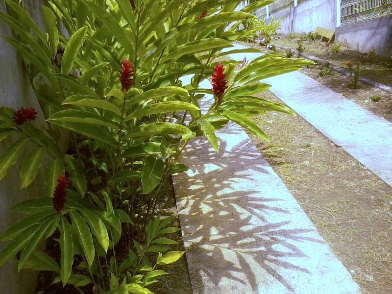 Allée des Alamandas, Gosier (Guadeloupe), location de vacances à Le Gosier