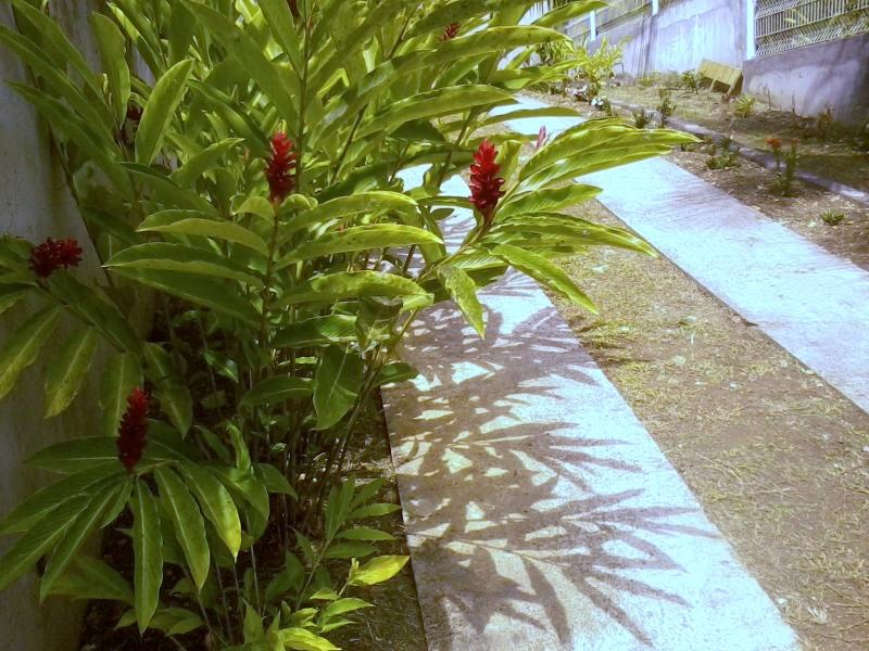 Allée des Alamandas, Gosier (Guadeloupe), holiday rental in Le Gosier