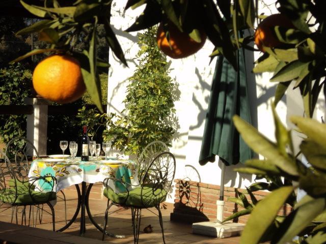 Casa restaurada S.XIX rodeada de árboles frutales, alquiler vacacional en Álora