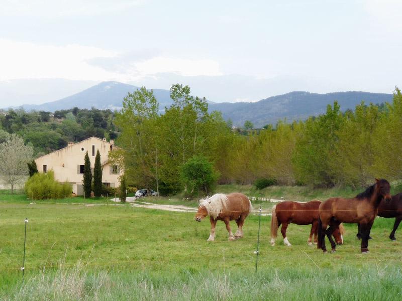Studio entre dentelles de Montmirail et Mont Ventoux, alquiler vacacional en Suzette