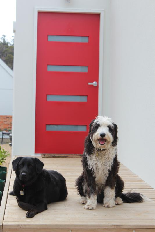 The official welcoming committee: Max the Smithfield (black & white) with his friend Archie