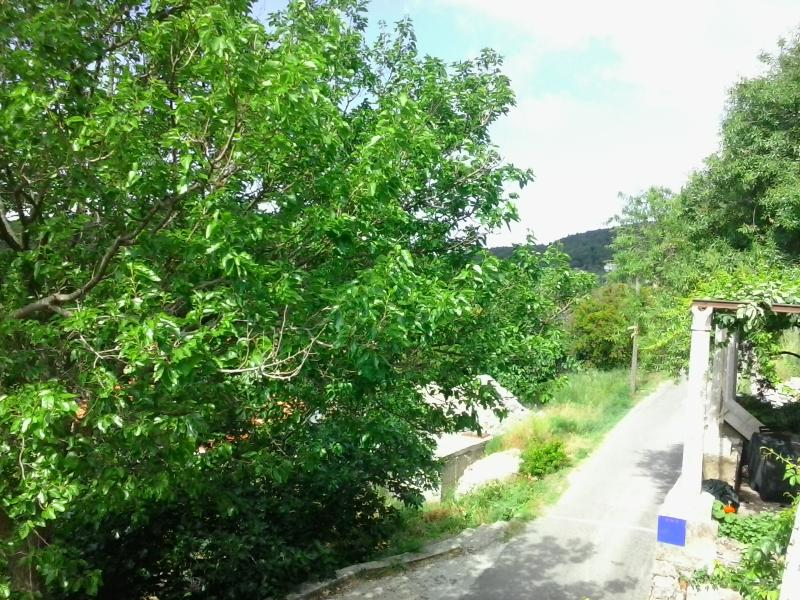 Apartment Feliks-in the middle of island, holiday rental in Mljet Island