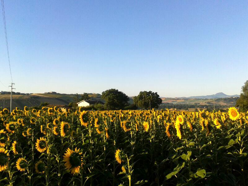 House in the Country Ostra / Senigallia, holiday rental in Ostra Vetere