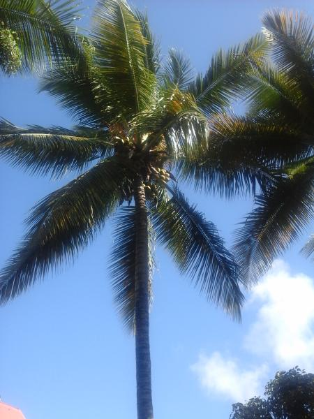 Where the trade winds lull coconut trees ... welcome to Ste Anne