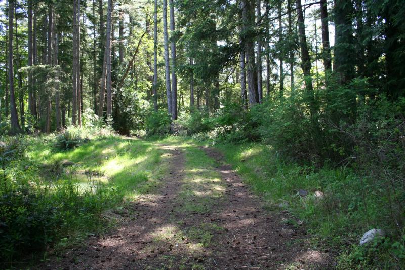 Take a stroll in the refreshing forested area.