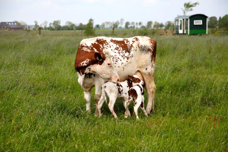 Newborn life in the pastures next to the circuswagon