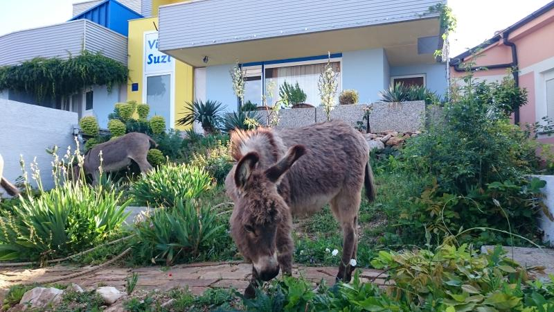 Spacious apartment with sea view and donkeys! (Lavender), alquiler vacacional en Smrika