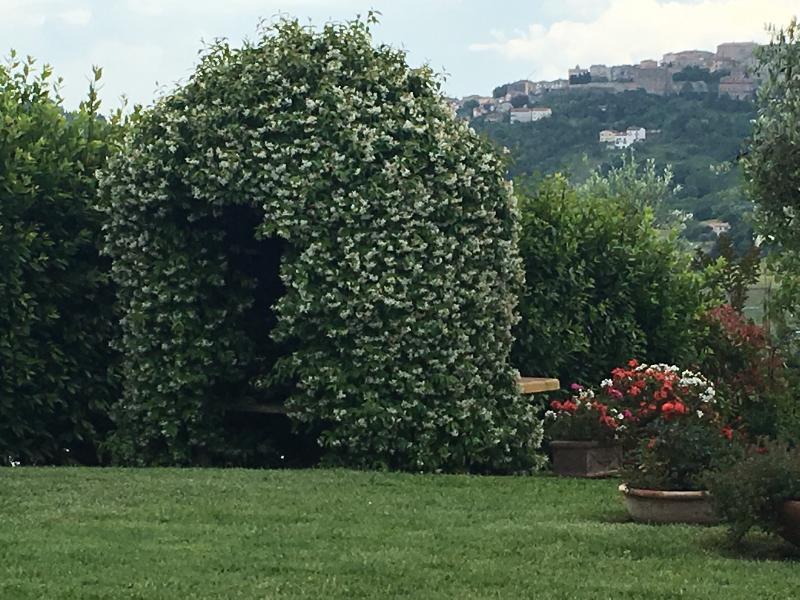 The jasmine arch
