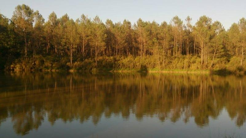 Cuckoo Lake - Forest,Fishing and Nature Holidays, vacation rental in Eygurande-et-Gardedeuil