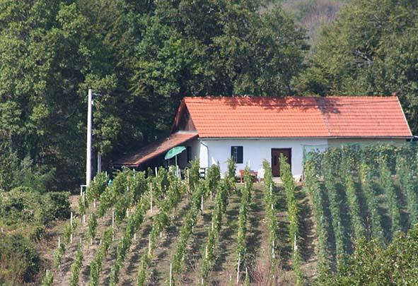 Charmante wijnboerderij - Kroatie, holiday rental in Destrnik