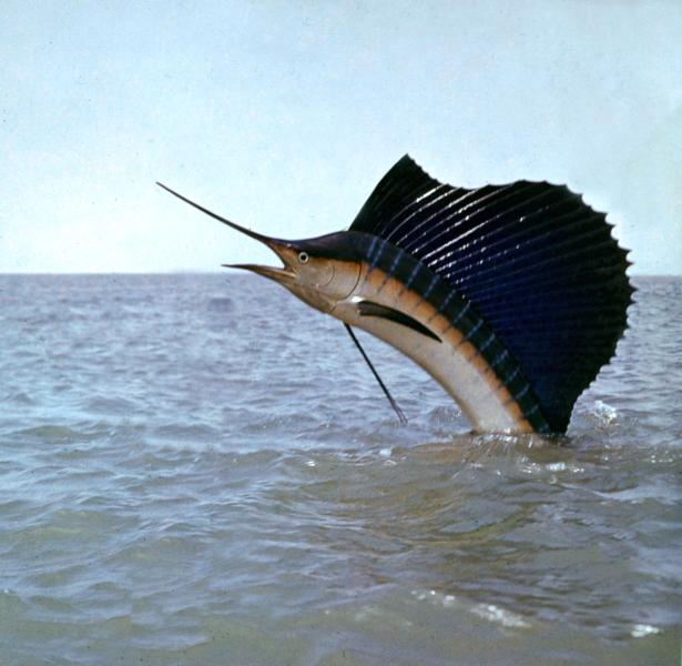 The fishing is amazing, Fish right off the beach or a charter at the Sailfish Capital of the world!