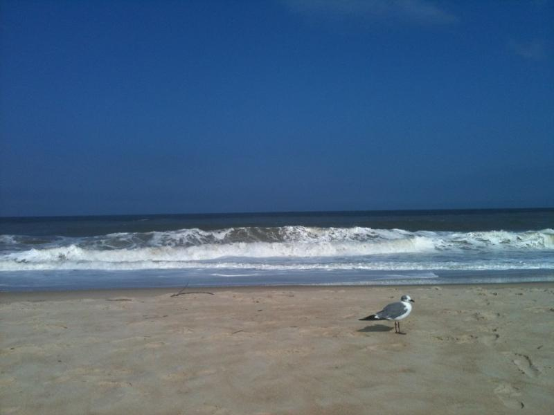 Beautiful Atlantic Ocean in Summer