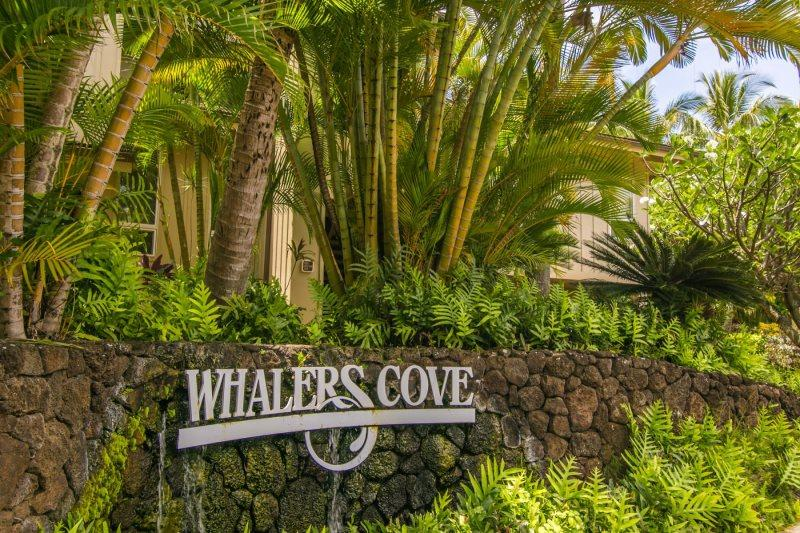 Welcome to Whalers Cove