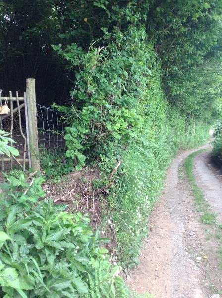 The entrance to the hut from the lane that leads up from our house.