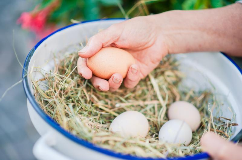 Free range eggs - for a delicious breakfast!