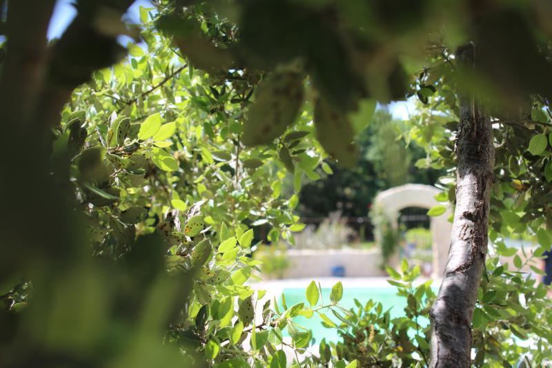 vue du jardin sur la piscine