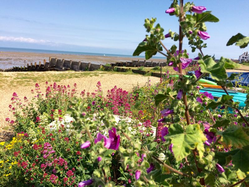 Whitstable beach in bloom - Spring 2016