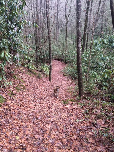 Fuga de caminhada na propriedade para White Owl Falls.