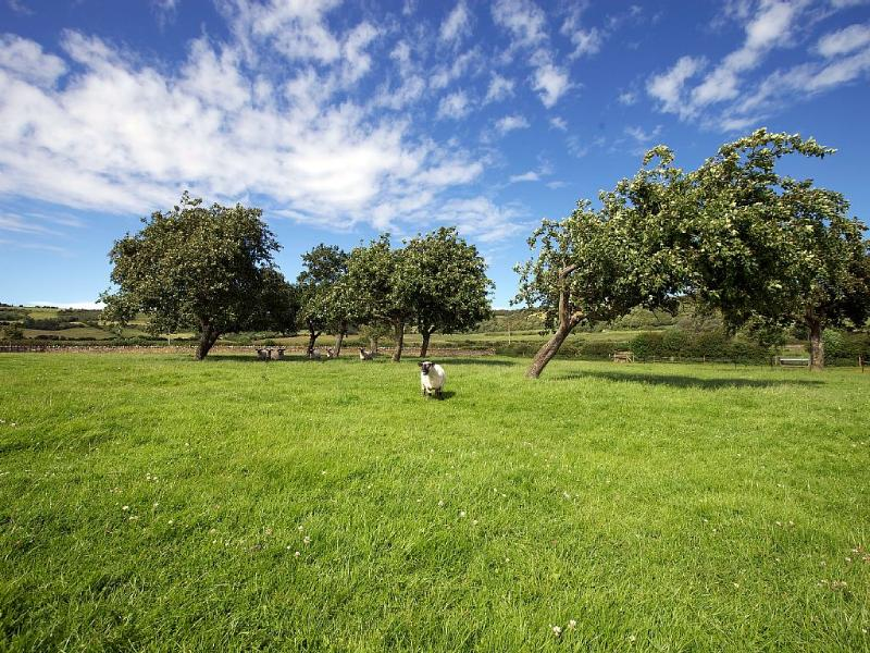 The front orchard