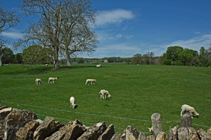 View over the rear garden wall out to fields and lambs in spring!