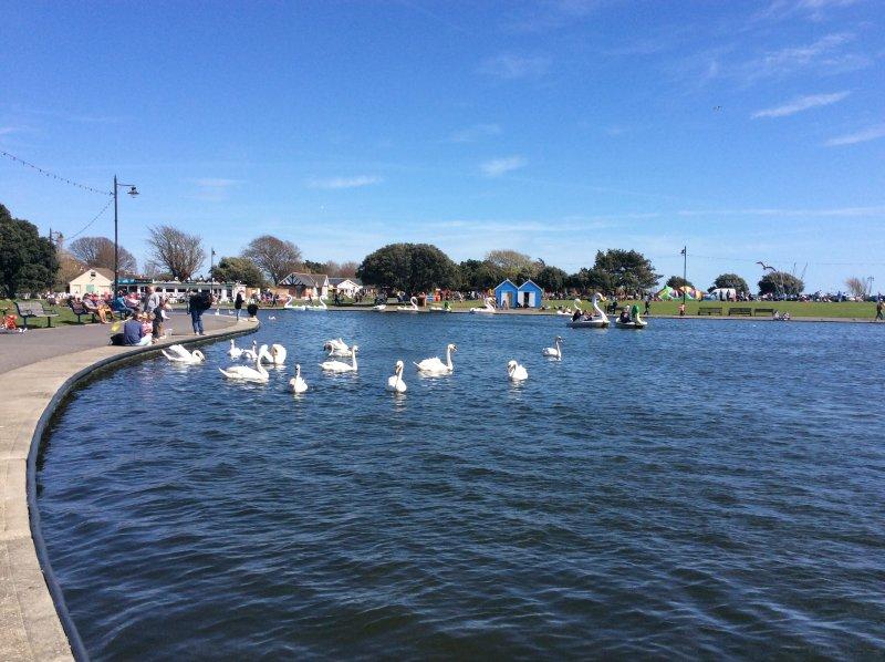 Een meer zonder zwanen .........