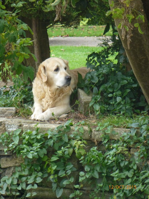 Bring your dog too, they are part of the family at Midsomer Cottage
