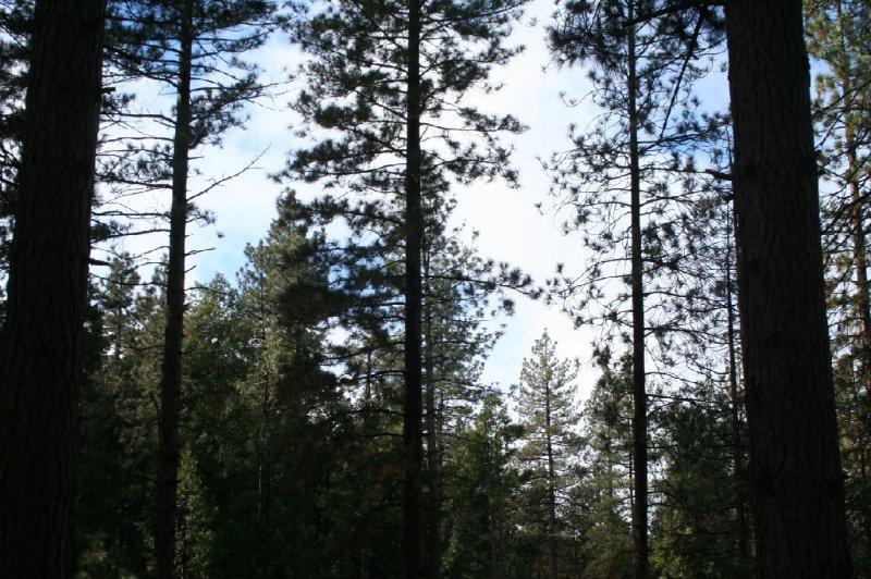 Accueil entouré de grands arbres et donne que la vraie cabane dans les bois