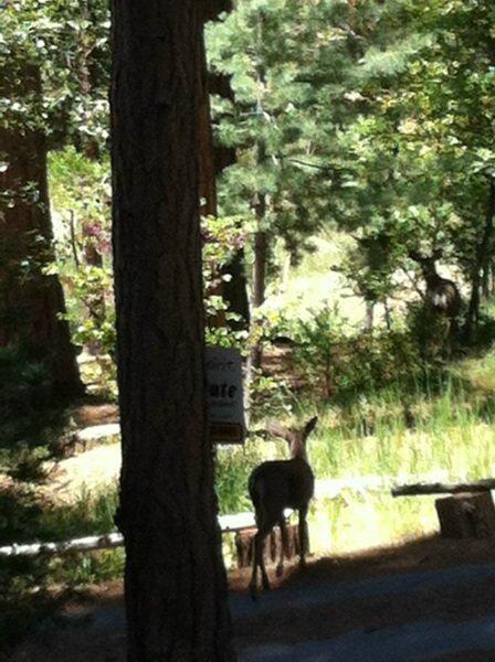 Les cerfs sont souvent vus à proximité puisque la maison est dans un quartier paisible.