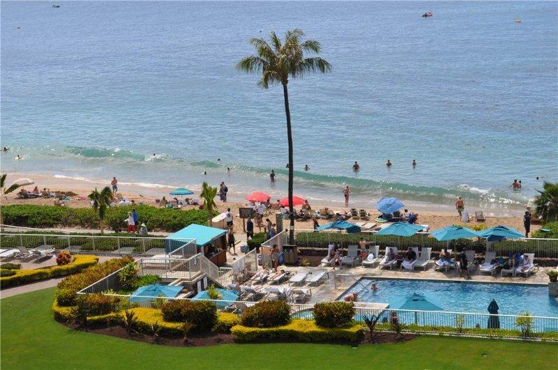 Palm, träd, Pool, vatten, strand