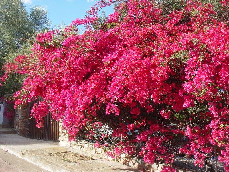 Villa Bouganvillea  sea view, garden, Wi-Fi free, location de vacances à Villasimius